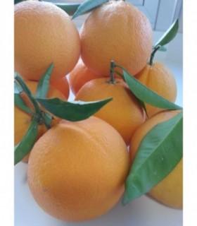 Naranja Lanelate Zumo