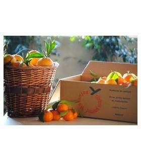 mandarina clemenules Baby